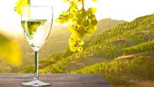 Weinglas bei Sonnenuntergang im Weinberg